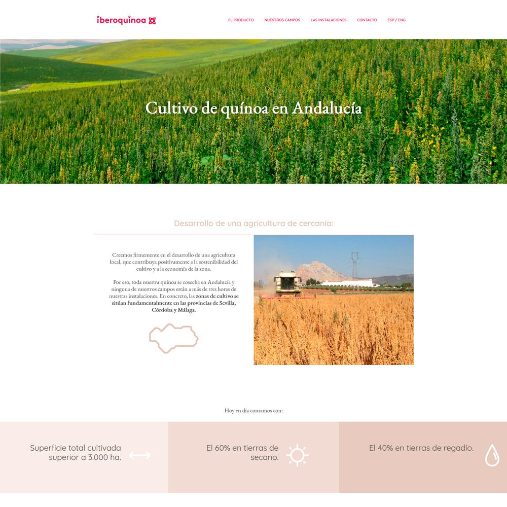 IBEROQUINOA - Cultivo de quinoa en Andalucía